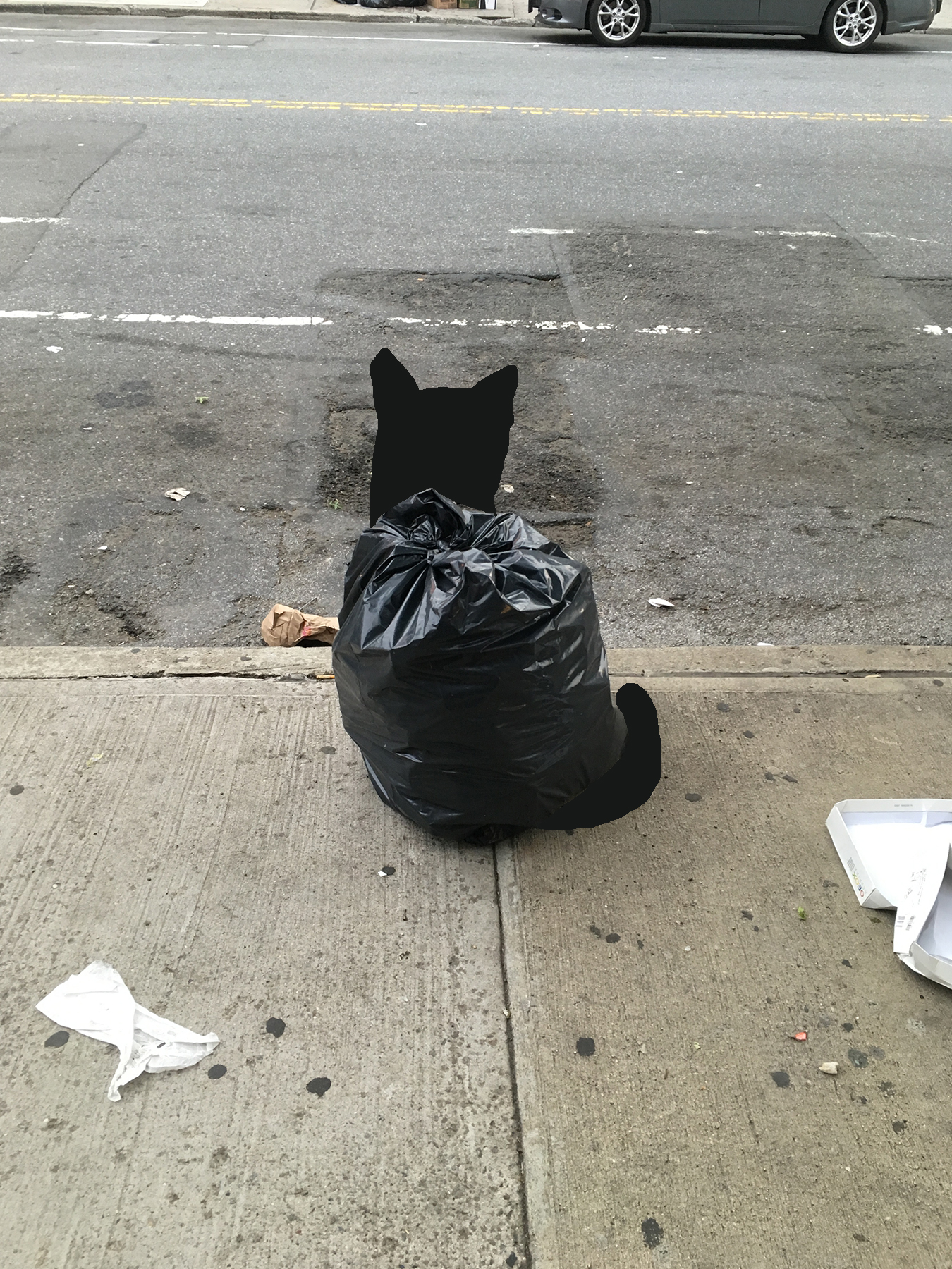 A photo of a trash bag, except now the bag is a cat